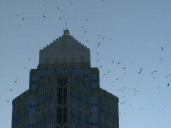 Corporate Buzzards Stock Footage