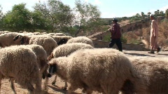 Men with Flock of Sheep & Dogs Stock Footage