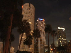 Palm Trees at Night Stock Footage