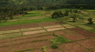 Birds flying over farmland from the air 2 Stock Footage
