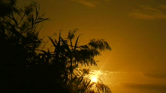 Locked down shot of marsh reeds at sunset 3 Stock Footage