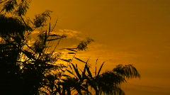 Locked down shot of marsh reeds at sunset 1 Stock Footage