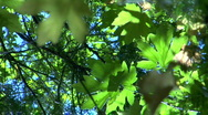 Beautiful Leaves & Foliage Bathed in Sun/Shadow Stock Footage