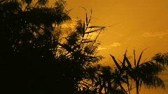 Tilt up of marsh reeds at sunset Stock Footage