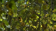 Autumn Leaves Bathed in Sun/Shadow Close-Up of Foliage Stock Footage