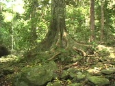 Tree in jungle Stock Footage