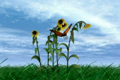 Butterfly and sunflower NTSC Stock Footage