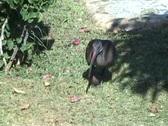 Long beaked bird Stock Footage