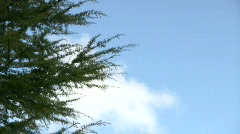 Nature sense - stock footage