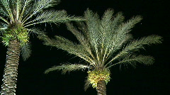 Palm Trees at Night on the Left Stock Footage