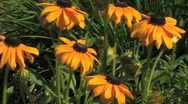Stock Video Footage of Yellow-Orange Flowers