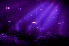 Purple Butterfly Forest - stock footage