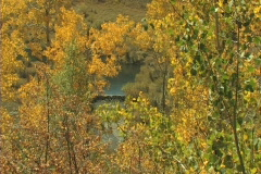 View Of Creek Thru The Aspens Stock Footage