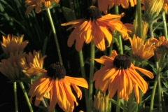 Alpine Garden Yellow Flower Zoom - stock footage