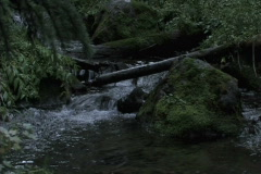 Stock Video Footage of Mountain Creek Moss Covered Rock