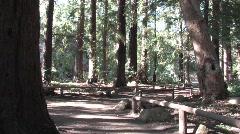 Redwoods in Santa Barbara Stock Footage