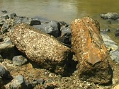 Stock Video Footage of Petrified tree trunks beside the rio Manati near Iquitos, Peru