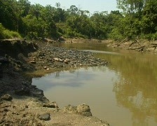 Fossil bivalves exposed in strata beside the rio Manati near Iquitos, Peru Stock Footage