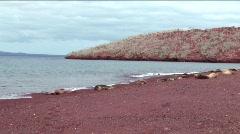 Dark red volcanic sand, Island of Rabida, Galapagos Islands, Ecuador Stock Footage