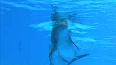 Smiling Dolphins - stock footage