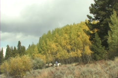 Stock Video Footage of Hunters   Packmules & Horses 1