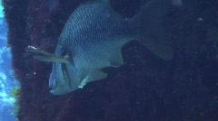 Fish Hiding 2  Stock Footage