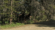 Wagon In The Woods Stock Footage