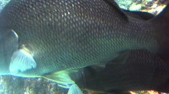 Two Fish Hiding  Stock Footage