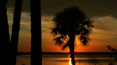 Florida ocean sunset with palm trees - stock footage