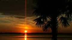 Florida Ocean sunset with palm trees Stock Footage