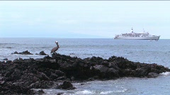 Stock Video Footage of Pelican on lave rocks, Galapagos Islands