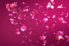 Flying petals Stock Footage