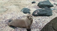 Stock Video Footage of Sea lion on the Galapagos Islands