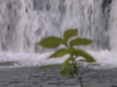 Stock Video Footage of shoal creek plant focus