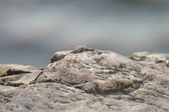 Shoal creek rock Stock Footage