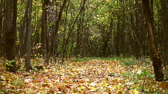 Fall leaves in autumn park Stock Footage