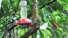 Lots of Hummingbirds in Peru Stock Footage