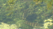 Fish In A Pond 02 Stock Footage