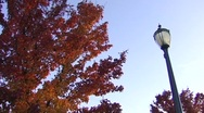 Lamppost & Autumn Tree Stock Footage