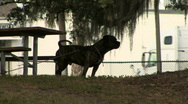 Large Dog In Silhouette 02 Stock Footage