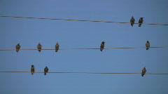 Ten birds. Stock Footage