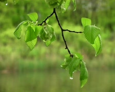 Leaves under river Stock Footage