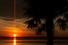 Florida sunset with palm tree in breeze - stock footage