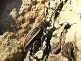 Dancing bug Stock Footage