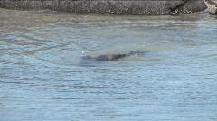 Sea lion on Galapagos Islands Stock Footage