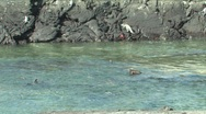 Marine Iguana, Galapagos Islands Stock Footage