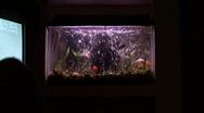 Goldfish In Aquarium 03 Stock Footage