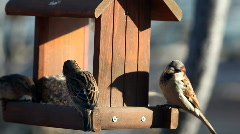 Stock Video Footage of Busy activity at the bird feeder