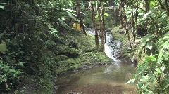 Stream in the Cloudforest highlands of Peru Stock Footage