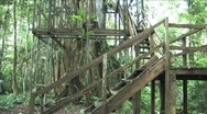 Stock Video Footage of Amazon 200 foot treehouse